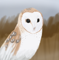 Barn Owl painting by HyperSpaceOddity