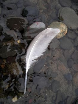 Feather and droplet by DigitalLithium