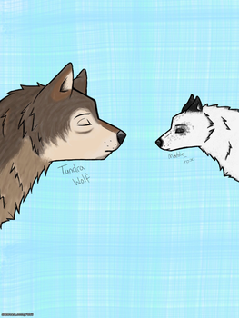 Tundra Wolf Marble Fox by WolvesLover2014