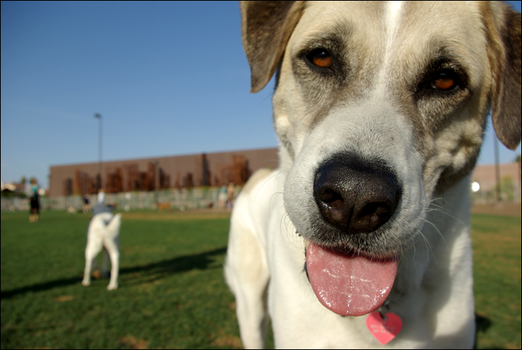 At the Dog Park by violentcyst