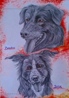 Baxter and Brice by RedSoulWolf13