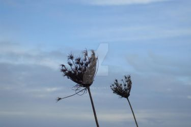 Queen Anne's Lace is Dead. by Weebeasty