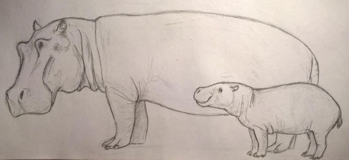 Hippos by CMIPalaeo