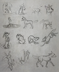 Coyote doodles by silverdragon76