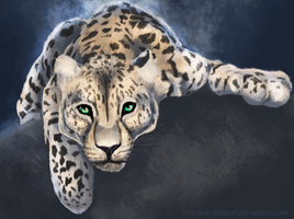Leopard by Miracat