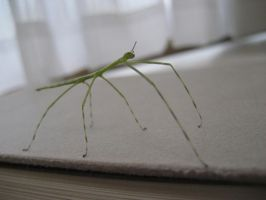 Stick Insect 6 by aru0