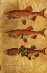 Surrealistic Nature Of Fish by ShaneGallagher