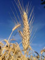 grain by maxiostg