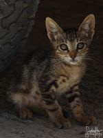 Little Kitty II by suphafly