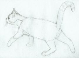 sketch of friend's cat 2 by Dandy-L