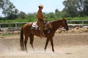 Chestnut quarter horse mare western pleasure by HorseStockPhotos