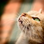 Ginger by PaulaMCollins