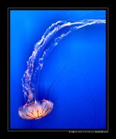 Jellyfish by radicalway