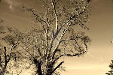 tree by MYMICHELLE1970