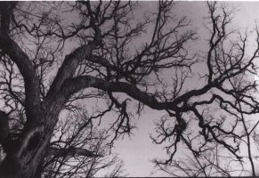 Tree by Crass-Infested
