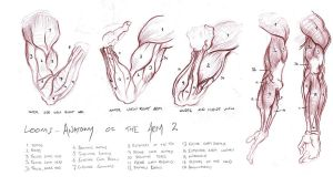 Anatomy Studies 006 by Gyzmotnik