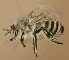 bee by Amaitae