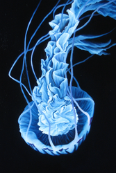 Blue Jelly PRINT by crazycolleeny