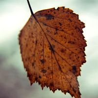 like a leaf in the wind by little-billie