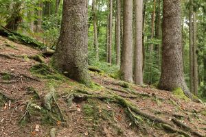 Forest Stock 162 by Malleni-Stock
