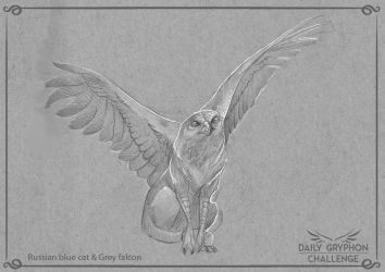 GryphonChallenge 06: Russian blue and grey falcon by Pechschwinge