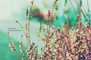 Floral view by winglum