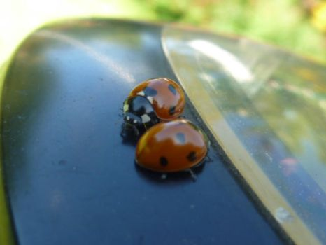 lady lady bug bug by TokyoBoots