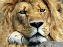 Lion Portrait by allison731