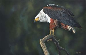 African Fish Eagle by robynansellart