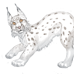 Lynx doodle by 8Life0is0a0game8