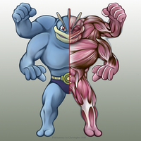 Machamp Anatomy