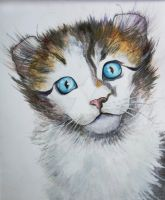 My drawing, American curl by GalinaChanturiya