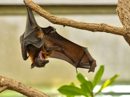 Flying Fox 03 by NellyGraceNG