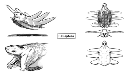 More folioptera sketches by Demmmmy