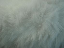Cat Fur Texture 7 by Orangen-Stock