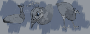 Indian Peahen studies by LeoMitchell