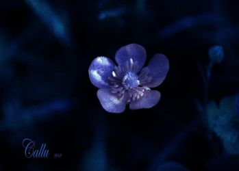 Blue Blue Reshaded 1 by Callu
