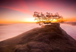 Magic tree 2 by mjagiellicz