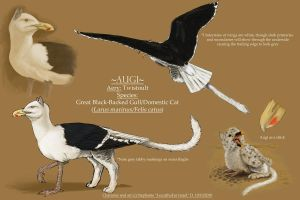 Augi - Windsonde Gryphon by LeccathuFurvicael