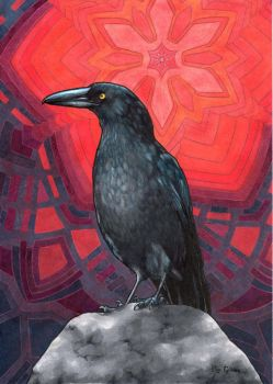 Currawong by secretplanet
