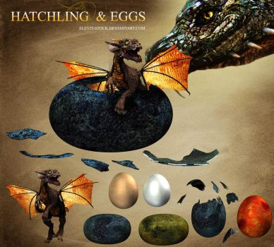 E-S Hatchling and eggs by Elevit-Stock