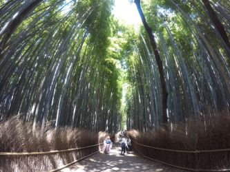 Trip to Japan #14 Bamboo forest by AlienGirl34