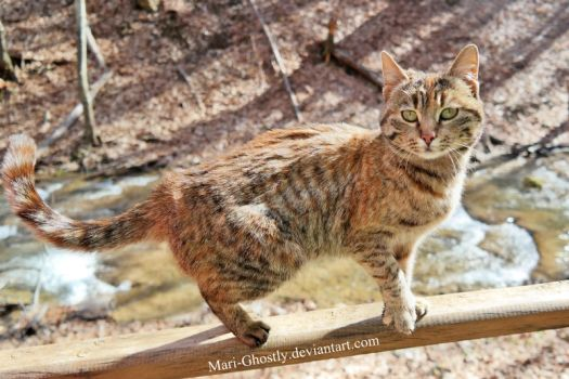 cat, who lives near the waterfall by Mari-Ghostly