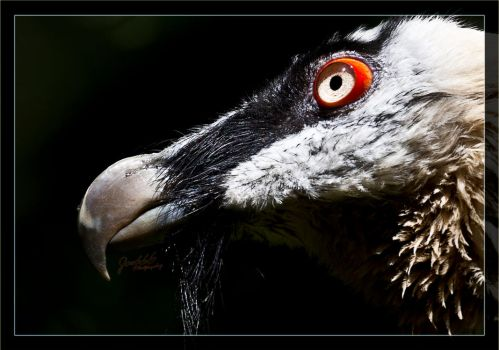 Red eye detailed by deaconfrost78