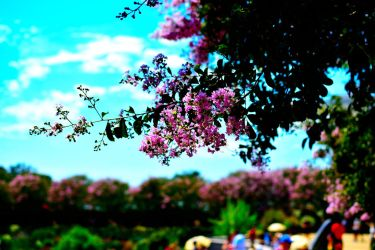 Flowers at the Getty Center by jziani