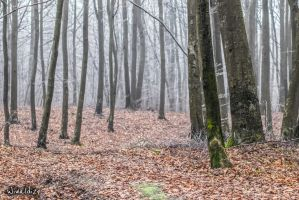 Forest in the fog by wiwaldi24