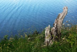 Stump, Grass and Water by wafitz