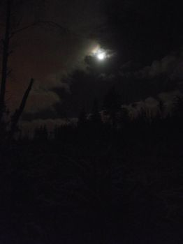 Moon and Jupiter over the forest 4 by DanaVarahi