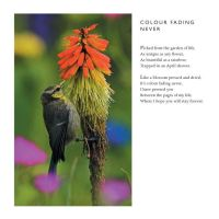 Colour Fading Never -Love Poem by Clive Blake by CliveBlake