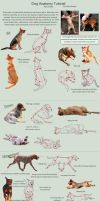 Dog Anatomy Tutorial 3 by SleepingDeadGirl